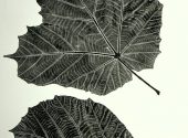 dinnerplate-leaf