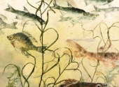 pond-driftmixedfreshwaterweed_0