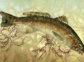 rolling-redfish-final-tif
